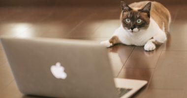 猫とパソコン