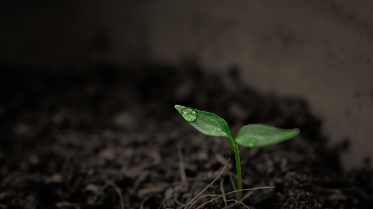 【まとめ】常に成長していれば安全!人生安泰です